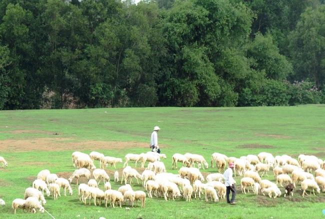 Những người chăn gia ở châu Phi thường đứng suốt ngày